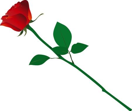 enkele roos Vector Illustratie
