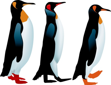 three penguins Vector