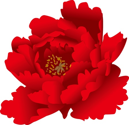 Romantic vector illustration of red peony Vector