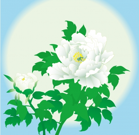 Romantic vector background white peony  Illustration