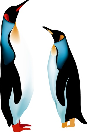 two penguins Stock Vector - 16306761