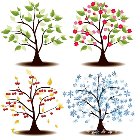 Four Seasons states cherry tree Vector