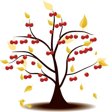 Autumn's tree Covered with cherries Stock Vector - 17090455