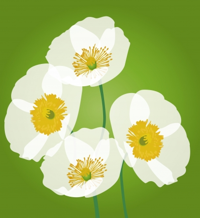 Row of poppy flowers isolated on green background