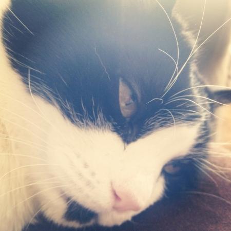 Closeup of cat.