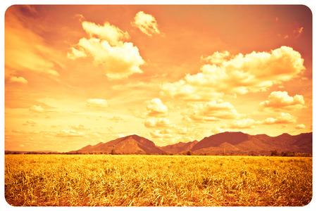 hues: Sugarcane is the most beautiful and abstract,Hot hues