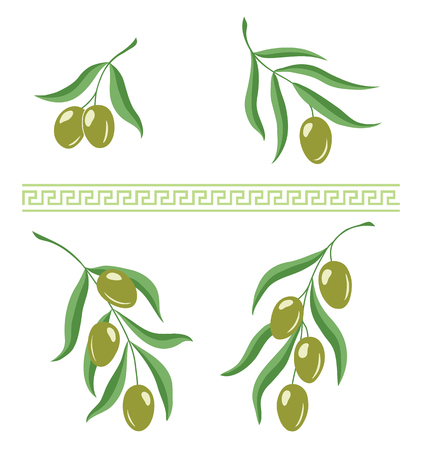 Illustration of olive branches and greek meandros ornament brush for design
