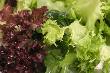 lettuces: Mixed Lettuce