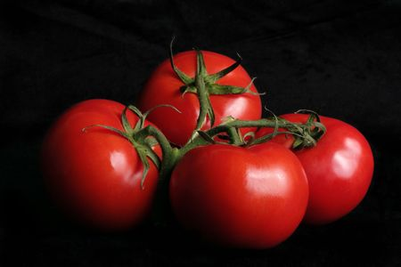 rich flavor: Vine ripened tomatoes on black background Stock Photo