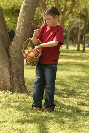 Young boy wearing jeans and red shirt holding a basket of pink lady apples. photo