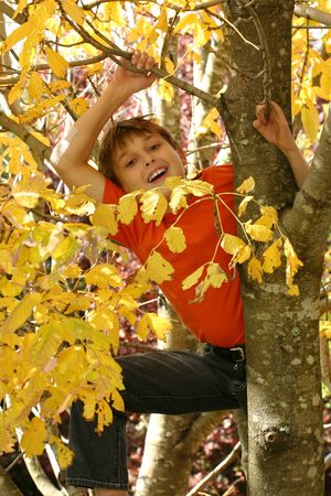 A child climbs among the branches of a deciduous tree in autumn.