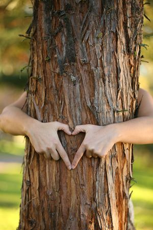 A nature lover environmentalist with arms wrapped around a pine tree and fingers formed in the shape of a heart.  Stock Photo