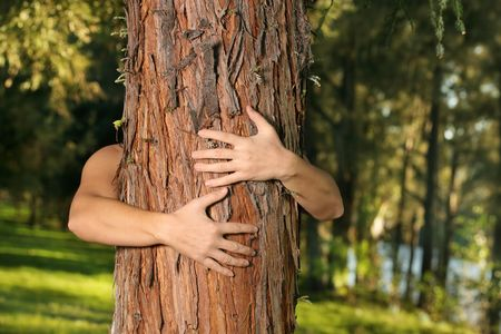 conservationist: A treehugger conservationist with arms wrapped around a conifer. f.8 Stock Photo