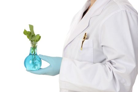 agricultural engineering: An agricultural or horticultural scientist holds a plant developed in a laboratory