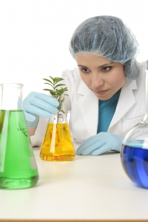 agricultural engineering: Female scientist examines plant in laboratory.