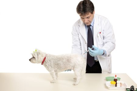 husbandry: A vet gives a pet dog an injection.  Focus to hand and dog.  Space for copy