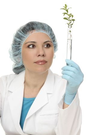 epidemiology: An agricultural scientist or botanist studies a plant in test tube.