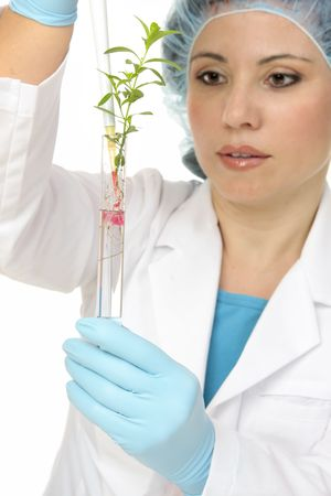 agricultural engineering: A scientist botanist dispenses  a solution from pipette into a test tube.  Focus to hand and test tube with plant.