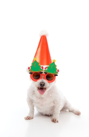 A happy dog wearing comical Christmas glasses and party hat. photo