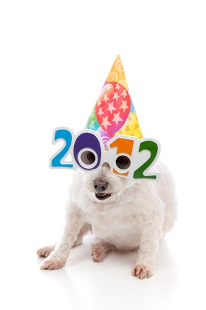 A funny white dog with comical 2012 glasses and wearing a colourful party hat to celebrate New Year 2012.  White background.