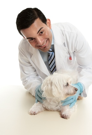 maltese dog: A male vet taking care of or attending to a small pet dog.   He is looking up with a friendly smile.