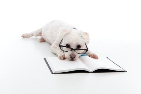 Lazy dog wearing reading glasses, head resting on an open book or textbook.  White background. Stock Photo - 12918802