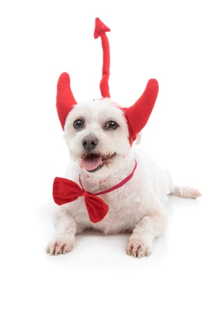 A white dog lying down with red devil horns, bow tie and tail Stock Photo