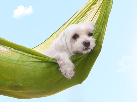 Cute dog siesta or lazing around under a beautiful summer sky