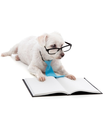 obedient: An obedient young dog training or learning, sitting down with a blank book and looking through black rim glasses.