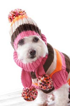 Cute dog wearing a warm knitted beanie, turtleneck sweater and matching scarf in bold striped colours.