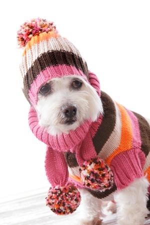 Netter Hund trägt eine warme Strickmütze, Rollkragenpullover und passendem Schal in kühnen Farben gestreift.