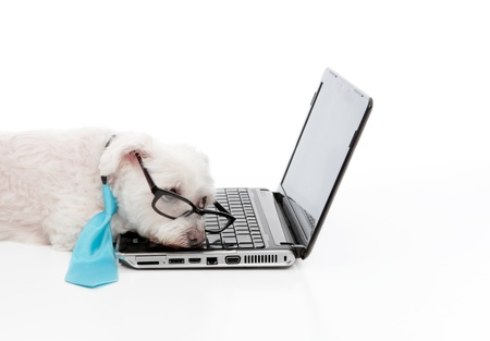 lazy: A tired, lazy, bored or overworked dog rests at the laptop computer. Stock Photo
