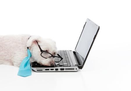 Ein müder, faul, gelangweilt oder überfordert Hund liegt an der Laptop-Computer. Standard-Bild