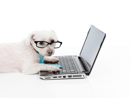 geek: Una empresa, educativa o comprador inteligente perro usando el ordenador o internet o extranet,