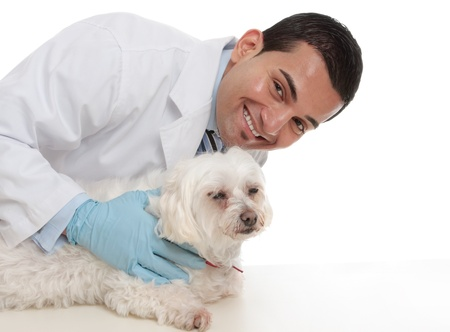 A smiling caring vet with a sick maltese terrier pet dog. Stock Photo - 13858331