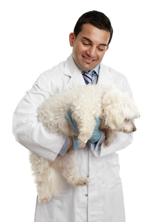 A male veterinarian carries a small dog in his arms.  White background. photo