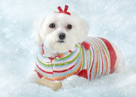 A small fluffy white dog wearing a cosy knitted striped sweater lays in icy snow.  Winter fantasy. photo