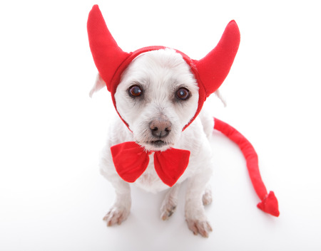 Little dog with devil horns and tail photo