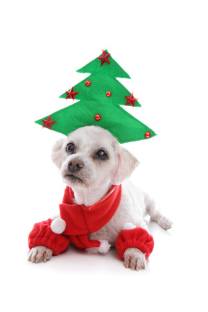 leg warmers: Cute puppy dog wearing a Christmas tree hat, red scarf and matching leg warmers
