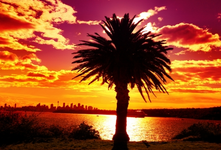 sizzling: Silhouette scenic view of Sydney Australia from South Head, summer afternoon