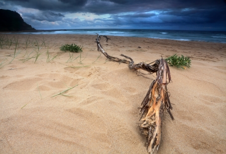 Life is not always sunshine and roses   Heavy storm clouds building up over the sea   Driftwood washed ashore in foreground  photo
