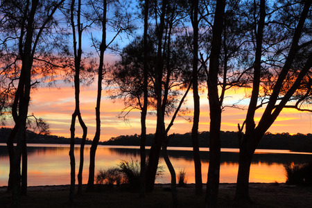 dioecious: Spectacular sunrise and reflections over the lagoon and the silhouette of the beautiful she-oak casuarina trees  A perfect day in Australia