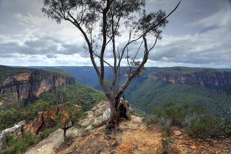 splendour: Australian gum tree stands tall on the edge of Burramoko Head, overlooking the Grose Valley, near Hanging Rock, NSW, Australia.