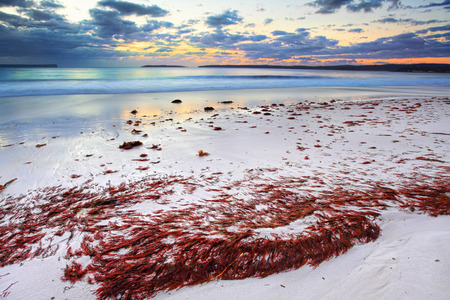 Magnificent red seaweed glistens under the pretty dawn skies just before the sunrise at Hyams Beach, NSW Australia Imagens