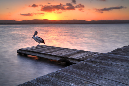destress: Sunset at Long Jetty NSW Australia.  A pelican roosts on one of the jettys on Lake Tuggerah as we admire the sunset.