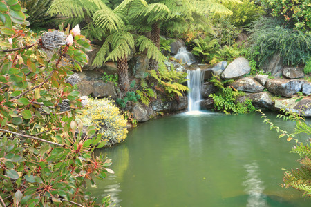 Beautiful waterfall amongst lush ferns, proteas and other plants at Mt Tomah NSW Australia