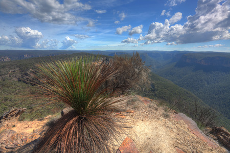 bushwalk: At the top of Burramoko Ridge (headland) at Blackheath NSW Australia.  Spectacular views of the Grose Valley below.  Only accessed from approximately 5km bushwalk trail