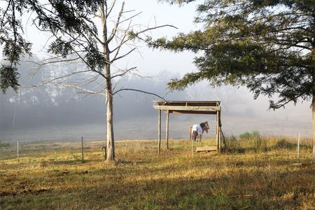 undulating: Morning fog and sunshine across the  undulating dewy countryside Stock Photo