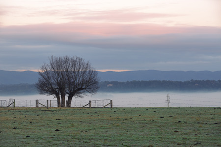 lowlands: Low lying fog across the lowlands with silhouette of a winter tree and background of mountains and clouds at sunrise Stock Photo