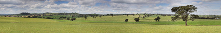 undulating: The beautiful undulating pastoral landscape of Canowindra in country NSW, Australia.  14 image stitched panorama